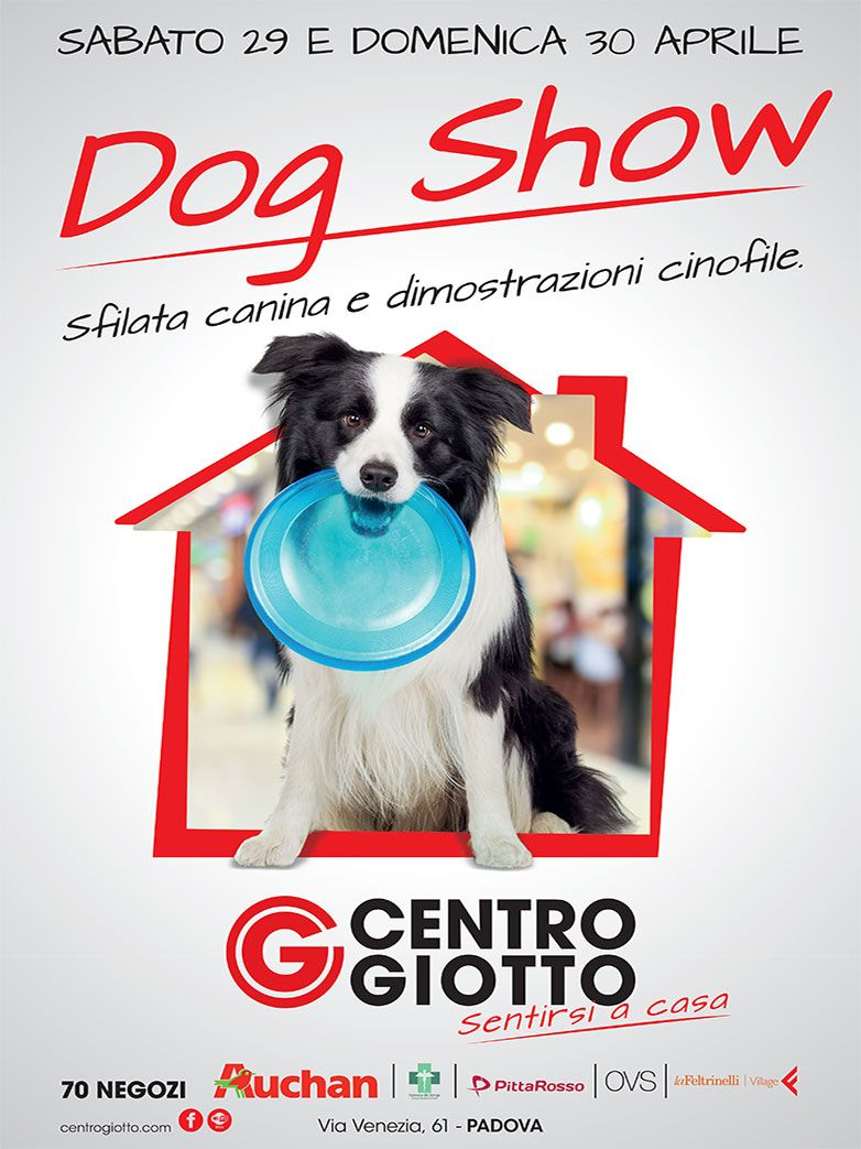 Dog Show a Padova - Sfilata canina e ...